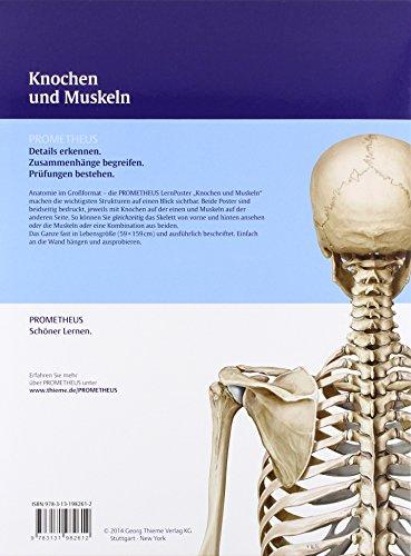 PROMETHEUS LernPoster der Anatomie, Knochen und Muskeln ...