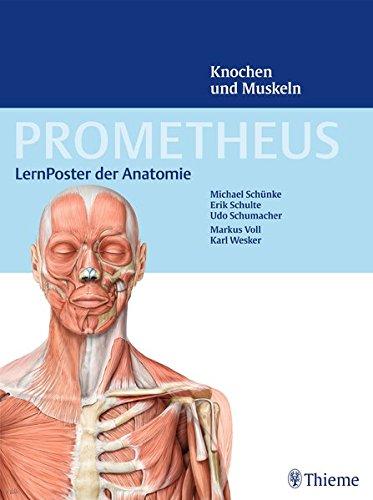 PROMETHEUS LernPoster der Anatomie Knochen und Muskeln 0